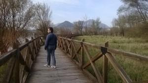 Il sentiero sopraelevato fra lago e canneto