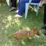 Il cagnolino di Claudia Koll
